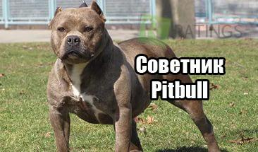 pitbull робот форекс